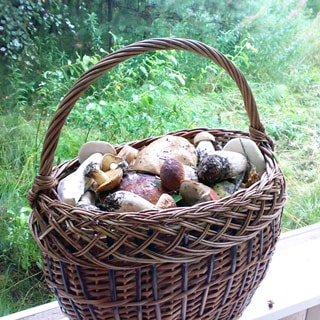 На фото: плетеная корзина полная грибов, на заднем плане - лесная растительность