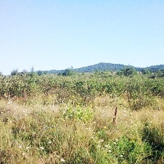 На летней фотографии: относительно ровная часть земельного участка с луговой растительностью, трава, дикорастущие цветы и мелкий кустарник, на дальнем плане небольшие деревья, за ними - холмы, покрытые лесной растительностью, надо всем - чистое голубое небо