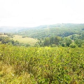 На летней фотографии: часть земельного участка с уклоном в сторону заднего плана, луговая растительность, трава, мелкий кустарник, на дальнем плане небольшие деревья, за ними - холмы, частично покрытые лесной растительностью и кустарником, надо всем - небо с небольшой облачностью