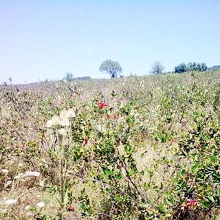 На летней фотографии: часть земельного участка с небольшим уклоном слева-направо, луговая растительность, трава, дикорастущая черноплодная рябина, на дальнем плане небольшие деревья, надо всем - чистое голубое небо