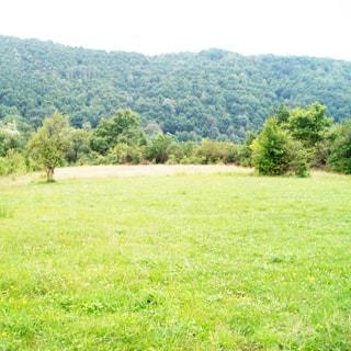 На летней фотографии: относительно ровная часть земельного участка с луговой растительностью, трава, на дальнем плане небольшие деревья и кустарник, за ними - горный склон, покрытый лесной растительностью, надо всем - чистое небо