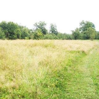 На летней фотографии: ровная часть земельного участка с луговой растительностью, трава, на заднем плане небольшие деревья и кустарник, по правой стороне участка - примятая трава от пешеходной тропы или проселка, надо всем - чистое небо