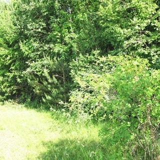 На фото: земельный участок, луговой, опушка леса, кустарники, лиственные и хвойные деревья, пустой, без построек, не разработан