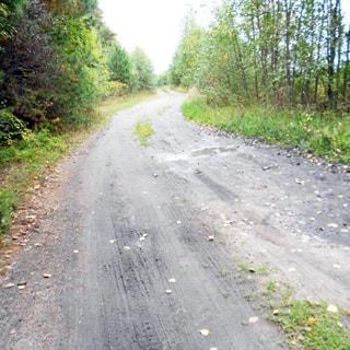 На фото: участок лесной проселочной грунтовой дороги, справа и слева - опушки смешанного леса, без уклонов, оврагов и канав