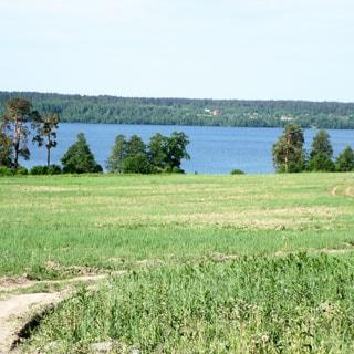 На фото: земельный участок, луговой, пустой, без построек, по участку проходит извилистая грунтовая дорога, на дальнем плане прибрежная лесополоса, за ней - водная гладь озера, за ней - противоположный берег, покрытый лесом
