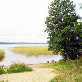 На фото: берег озера, песчаный и с травяным покровом, на берегу - дерево у самой воды, прибрежная часть водоема частично поросла тростником, за ней - большая вода, вдалеке виден противоположный берег