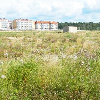 На фото: земельный участок, луговой, пустой, не застроен, на участке - трансформаторная подстанция, на дальнем плане - жилая застройка и лесополоса