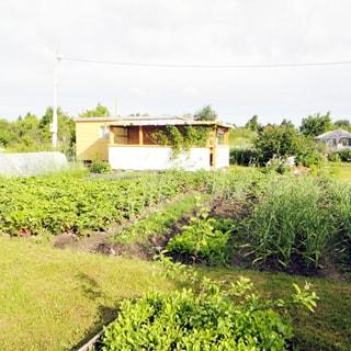 На фото: часть земельного участка, участок ровный, разработан, на участке - грядки, садовые посадки, теплица, беседка, хозблок
