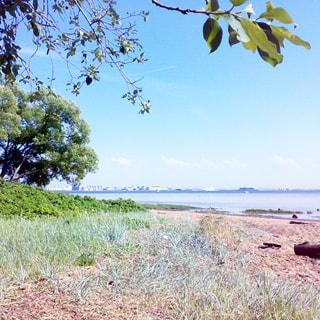 На летнем фото: пологий берег крупного судоходного водоема, на берегу кустарник, деревья, осока и песок. Вдали виден противоположный берег водоема с жилыми домами, ближе к противоположному берегу видны круизные лайнеры