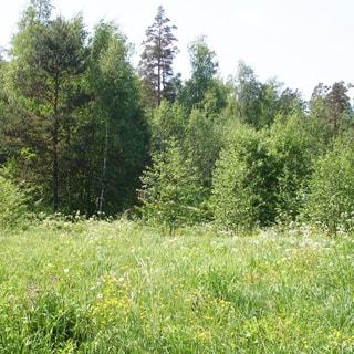 На фото: земельный участок, луговая растительность, на заднем плане - опушка леса, участок ровный, пустой, не разработан, без построек
