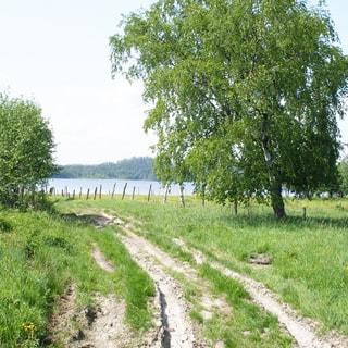 На фото: проселочная грунтовая дорога, слева от дороги - луг, кусты, справа от дороги - луг, дерево, огороженный земельный участок, впереди на дальнем плане - водная гладь водоема, на противоположном берегу - лес