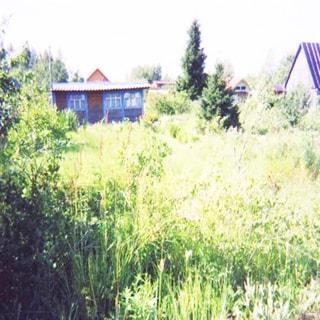 На фото: земельный участок, трава, грядки, садовые посадки, кусты, деревья, на заднем плане - небольшое одноэтажное строение хозблока с окнами, за ним - соседние участки с постройками