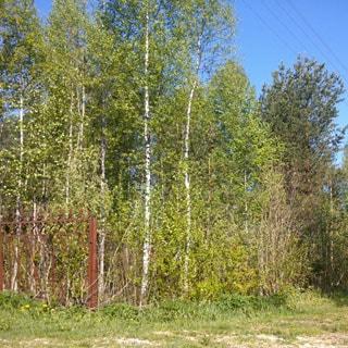 На фото: солнечный ясный день, земельный участок, полностью покрыт молодым смешанным лесом, частично огорожен металлическим забором, по правой границе участка видны провода воздушной линии электропередачи