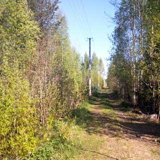 На фото: проселочная лесная дорога, справа и слева - смешенный лес, по левой стороне дороги проходит воздушная линия электропередачи по бетонным столбам