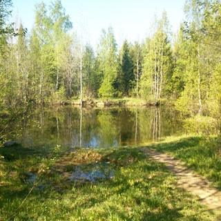 На фото: лесной водоем в окружении смешанного леса, к берегу подходит тропинка