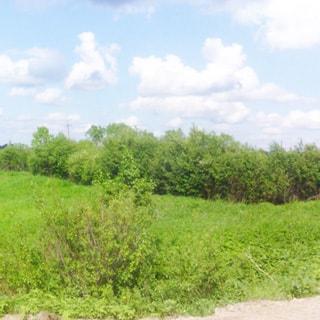 На фото: вид с дороги на земельный участок, участок ровный, луговой, не разработан, без построек, покрыт травой и кустарником