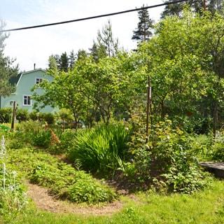 На фото: часть земельного участка, участок ровный, благоустроен, газон, грядки, садовые посадки, кусты, деревья, за участком на дальнем плане - дом соседнего участка