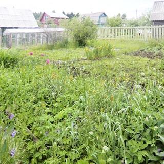 На фото: земельный участок, ровный, разработан, разбиты грядки, клумбы, высажены кусты, устроена небольшая теплица, за забором - соседние участки и домики