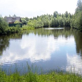 На фото: часть поверхности водоема - озера или пруда, по берегам - трава, кустарник, деревья
