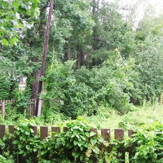 На фото: огороженный невысоким деревянным забором земельный участок, участок пустой, постройки отсутствуют, на участке - высокая трава, у забора со стороны участка - деревянный столб электросети, по забору - вьющиеся растения и кустарник, за забором - деревья