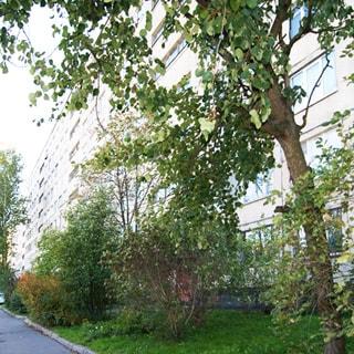 На фото: часть фасада многоэтажного панельного жилого дома, по фасаду - лоджии, благоустроенная придомовая территория, газон, деревья, кусты, асфальтированные тротуары