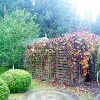 На фото: хозяйственная деревянная постройка - дровник, декорирован вьющимися растениями с желтыми и красными листьями, перед постройкой и слева от нее - придомовой участок с мощеными дорожками, газонами, ландшафтным дизайном и декоративными растениями, за ней - забор и соседний участок