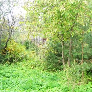 На фото: часть земельного участка, трава, кусты, деревья, на заднем плане - деревянный забор соседнего участка