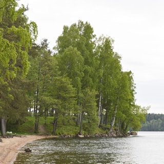 На фото: часть прибрежного земельного участка, выдающийся рельефный мыс, поросший смешанным лесом, узкая береговая полоса - песчаная, по мысу - берег каменистый, справа - обширная водная гладь водоема, на противоположном берегу - лесной массив