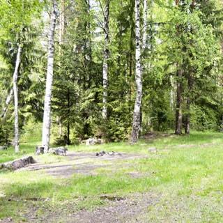 На фото: часть лесного земельного участка, участок пустой, поросший травой, небольшой уклон от заднего плана к переднему, на заднем плане - граница леса, ели, сосны, березы