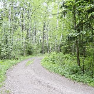 На фото: лесная грунтовая дорога, справа и слева - лесной массив, кустарник, лес смешанный, дорога - ровная без ям и выбоин