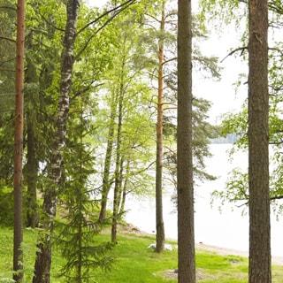 На фото: часть лесного участка, примыкающего к берегу водоема, вид из глубины участка с возвышенности в сторону берега, редколесье, сосны, сосны, ели, березы, на заднем плане - водная гладь водоема, на противоположном берегу - лесной массив