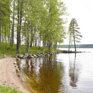 На фото: часть прибрежного земельного участка, выдающийся пологий мыс, поросший смешанным лесом, узкая береговая полоса - песчаная, по мысу - берег каменистый, на вершине мысе - одинокая сосна, справа - водная гладь водоема, на противоположном берегу - лесной массив