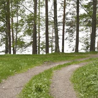 На фото: часть лесного земельного участка с проходящей по нему грунтовой дорогой, редколесье, смешенный лес, на заднем плане - водная гладь водоема, на противоположном берегу - лесной массив