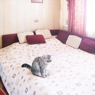 На фото: часть помещения жилой комнаты - спальни, окно, большая двуспальная кровать, на кровати подушки и кот, стены оклеены обоями
