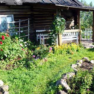 Жилой бревенчатый дом 65 кв.м на 25 сотках ЛПХ в деревне Сабо (Толмачево, Лужский) продается. Дом 1941 г/п с открытой верандой