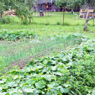 Жилой бревенчатый дом 65 кв.м на 25 сотках ЛПХ в деревне Сабо (Толмачево, Лужский) продается. Огород