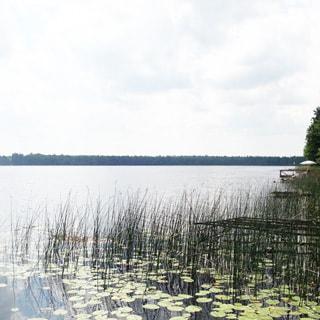 Жилой бревенчатый дом 65 кв.м на 25 сотках ЛПХ в деревне Сабо (Толмачево, Лужский) продается. Красногорское озеро - 230 м