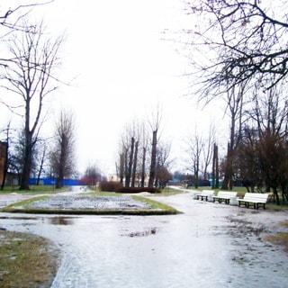 На фото: территория сквера, пешеходные дорожки - грунтовые, размокли, лужи, хлябь, газоны с зеленой травой, кустарники и деревья без листвы, садовые скамейки и урны