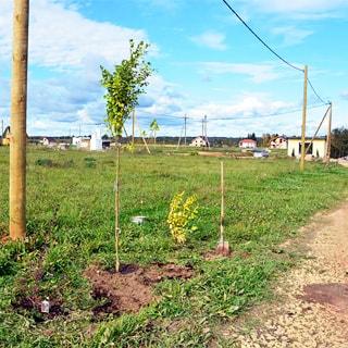 Земельный участок 10 соток ДНП в деревне Рыбицы (Гатчинский, Рождествено) продается. Участок ровный, не разработан, без построек, не огорожен