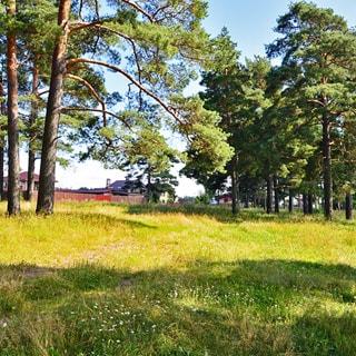 Земельный участок 15 сот ДНП у деревни Ванино Поле (Лужский, Скреблово) продается. Участок ровный, не разработан, без построек, не огорожен