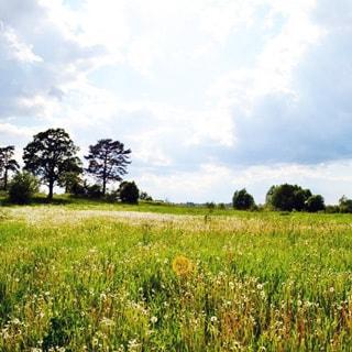 Земельный участок 15 сот ДНП у деревни Ванино Поле (Лужский, Скреблово) продается. Прекрасное место для отдыха