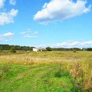 Земельный участок 20 соток ЛПХ в Жабино (Гатчинский) продается. Участок не разработан, без построек, не огорожен