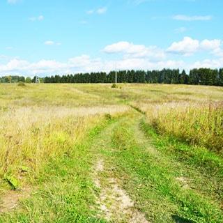 Земельный участок 20 соток ЛПХ в Жабино (Гатчинский) продается. Рядом - лес (грибы, ягоды)