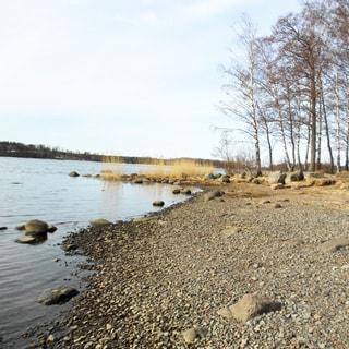 На фото: берег водоема, спокойная вода, галька, небольшое количество валунов, редкая лесная растительность, деревья, вдалеке - противоположный берег