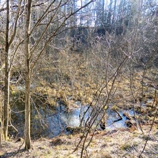 На фото: заболоченная часть земельного участка, небольшой пруд или болотце, лиственное мелколесье, кустарник, ровный, свободный, без построек, не огорожен