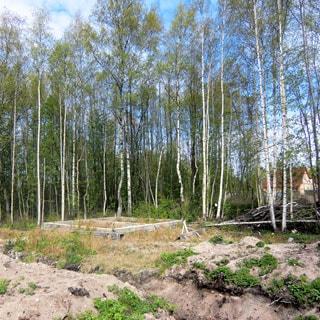 На фото: часть земельного участка с фундаментом жилого дома, за заднем плане - молодые деревья, кустарник