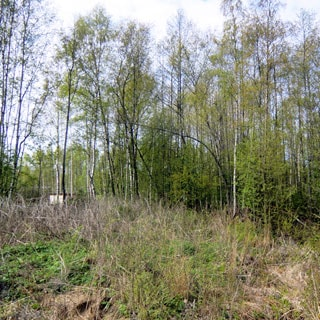 На фото: часть земельного участка без построек, за заднем плане - молодые деревья, кустарник
