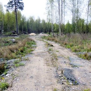На фото: участок грунтово-гравийной дороги, за заднем плане - деревья, кустарник