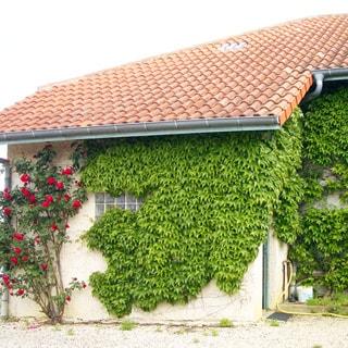 На фото: часть фасада со стороны одноэтажной пристройки, кровля - черепица, стена дома декорирована растениями