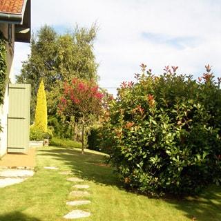 На фото: придомовая территория, газон, мощение, декоративные деревья и кустарники